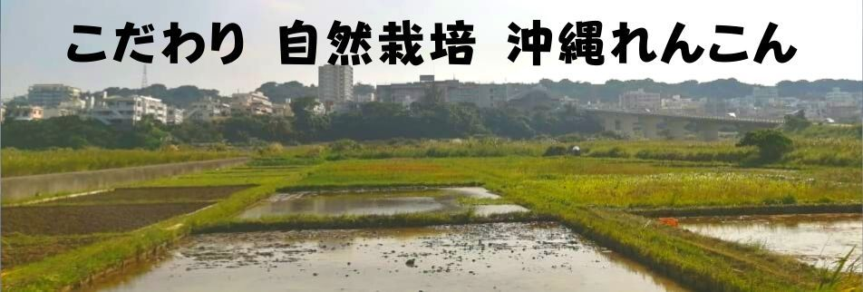 沖縄健康/自然栽培/こだわり野菜/収穫体験も出来る沖縄れんこん/サンキューファーム
